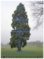Giant Redwood Tree, War Memorial Park (annotated).PNG