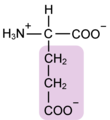 Glutamate w functional group highlighted.png