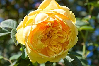 Golden Celebration (4493126140).jpg