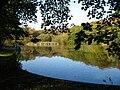 Golly pond.jpg