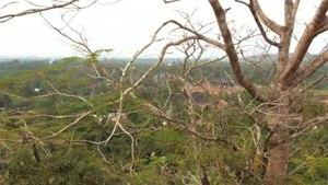 File:Gomateswara Karkala Karnataka.webm