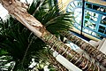 Graffiti carved palm trunks, The Palm House, Alexandra Palace - panoramio.jpg