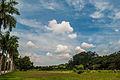 Gramado verde e céu azul.jpg