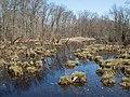 Great Swamp (63617).jpg