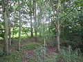 Green space near Pool Lane, Ince, Cheshire (6).JPG