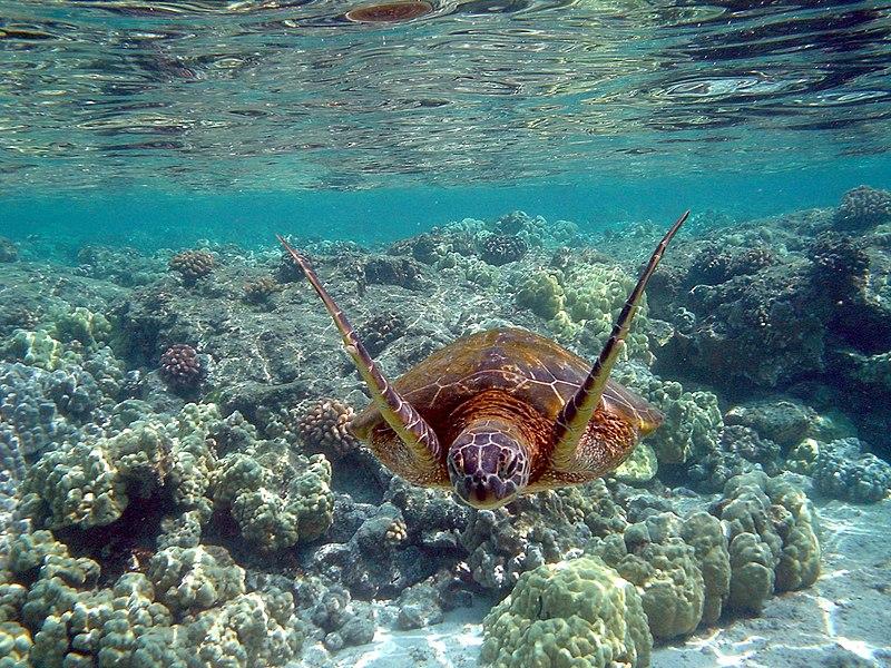 deniz kaplumba�alar� hakk�nda bilgi