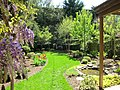 Greening of my yard - panoramio.jpg