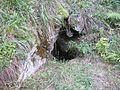 Großer Otter6.jpg