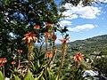 Guadalest - panoramio (2).jpg