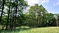 Hässeler Weiher von Neuenhaßlau - Reihe von Bäumen.jpg
