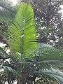 HK ML 香港半山區 Mid-levels 上亞厘畢道 Upper Albert Road flora green leaves April 2020 SS2 13.jpg