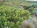 Hardy Plantlife - panoramio.jpg