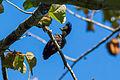 Heart Spotted Woodpecker(Female).jpg
