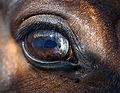 Hepan silmä 3.JPG