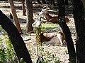 Herbivores (2363294345).jpg