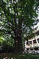Hibiya Park06s3200.jpg