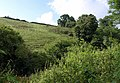 Hillside near Fleet Mill - geograph.org.uk - 913757.jpg