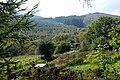 Hillside near Pant-yr-esgair - geograph.org.uk - 968531.jpg