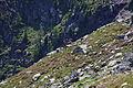 Hirsche fürstkar 1293 13-07-13.JPG