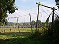 Hop Fields near Suckley Court - geograph.org.uk - 56427.jpg