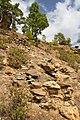 Horno de brea - panoramio (1).jpg