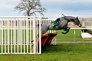 Hurdle - A horse free-jumping a steeplechase-type hurdle