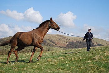 English: Horse Training Wattie Adams, exercisi...