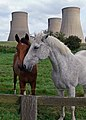 Horses and cooling towers - geograph.org.uk - 556824.jpg