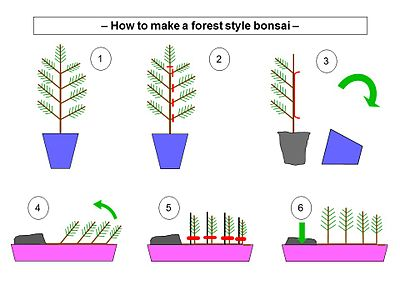 How to make a forest style bonsai from one tree.jpg