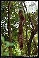 Hymenoptera (6022578738).jpg