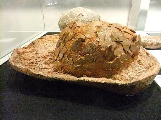 Hypselosaurus priscum egg, Wrexham Museum (1)