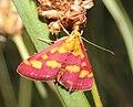 IKAl 20100804 Schmetterling.jpg