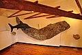 Ichtosaurius de la réserve géologique de Haute-Provence.jpg