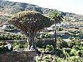 Icod de los Vinos, Santa Cruz de Tenerife, Spain - panoramio.jpg