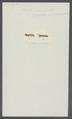 Idotea dorsalis - - Print - Iconographia Zoologica - Special Collections University of Amsterdam - UBAINV0274 098 06 0004.tif