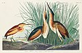 Illustration from Birds of America (1827) by John James Audubon, digitally enhanced by rawpixel-com 210.jpg