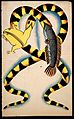 Illustration of a Bengali proverb; two watersnakes swallowin Wellcome L0022508.jpg