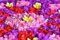 Indonesia Flowers.tiff