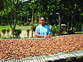 Indonesia cashews.jpg