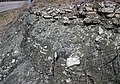 Interbedded shale and limestone (upper Cave Branch Member, Slade Formation, Upper Mississippian; Clack Mountain Road Outcrop, south of Morehead, Kentucky, USA) 2 (46376599091).jpg