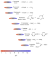 Ionization of groups in proteins.png