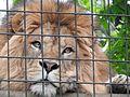 Ishikawa Zoo - Animals - 33 - 2016-04-22.jpg