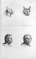 J.C. Lavater, L'Art de connaitre les hommes... Wellcome L0025308.jpg