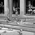 Jackson Square pigeon watcher, New Orleans.jpg