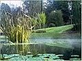 January Frost Botanic Garden Freiburg - Master Botany Photography 2014 - series Germany Diamond pictures - panoramio (8).jpg