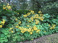 Jardim Jose do Canto (14008829034).jpg