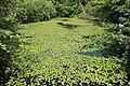 Jardin Botanique Royal Édimbourg 45.jpg