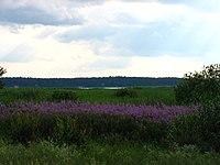 Jaunciems, Northern District, Riga, Latvia - panoramio.jpg