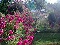 Jedna avlija na Rijeci - panoramio.jpg