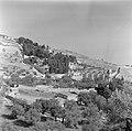Jeruzalem. Gezicht op de Olijfberg met beneden de Gethsemanekerk (Kerk van alle , Bestanddeelnr 255-1656.jpg
